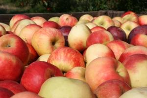 apple-crate-3-1413818-m